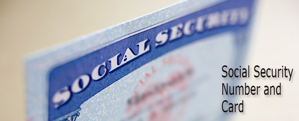 social security card application status online